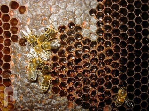 وين ألقى العسل اليمني الحضرمي بالرياض