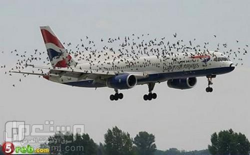 صور جميلة وغريبة وطريفة نذالة طيووور
