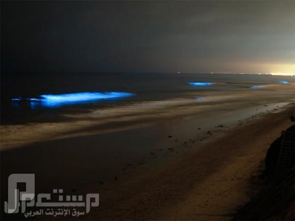 ظاهرة طبيعية مدهشة // شواطئ تتلألأ كالنجوم