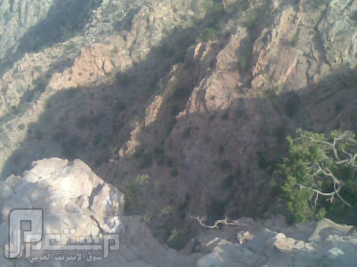 مناظر من تصويري لمحافظة الطائف ومنطقة الشفا مناظر من الشفا6