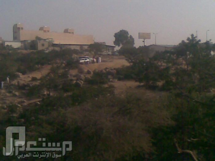 مناظر من تصويري لمحافظة الطائف ومنطقة الشفا مناظر من الشفا9