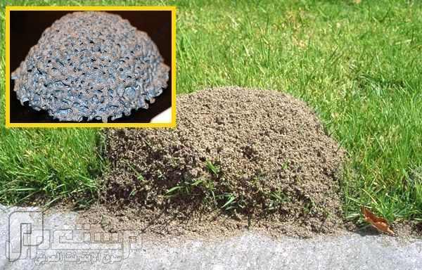"""عالم يسكب الألمنيوم المصهور """"650 درجة"""" في بيوت النمل"""