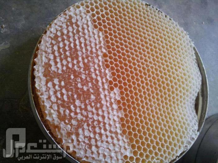 مناظر ولا اروع منها من حضرموت ( الجزء الثاني) العسل الحضرمي