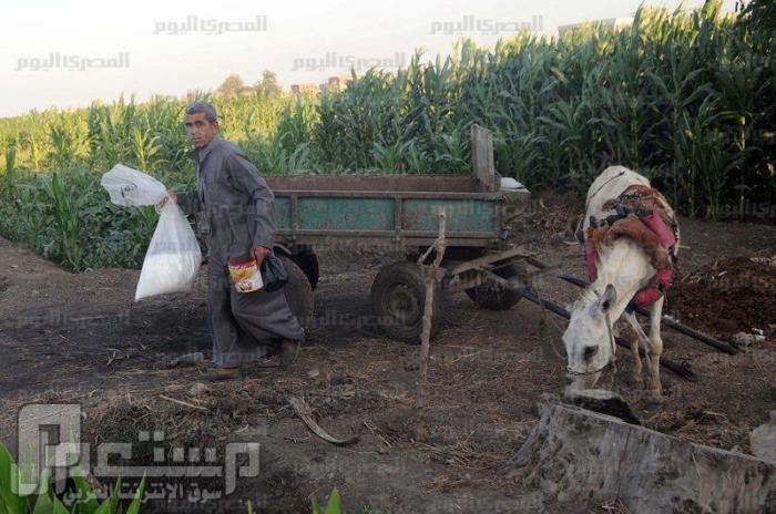 أخو الرئيس مرسي