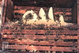 خصائص العسل الطبيعي سبحان الله