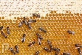 الزفاف الملكي (النحل)