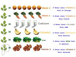 المورينجا شجرة الحياه استخداماتها و اهم المعلومات عنها