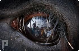 مقطعين لذبح الأضحية واقتراح عسى ربي يرحمنا ويتقبل عينها تلقط صورة وتحتفظ بها فهي شاهدة لك أو عليك