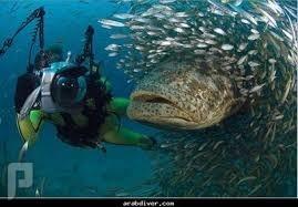 من منكم جرب رحلة بحرية صيد في جدة