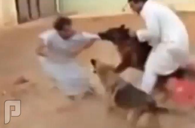 بالفيديو..سعودي يلقي بصديقه بين أنياب الكلاب..
