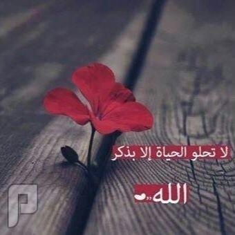 تكفون//كيف اوصل للامير عبدالعزيز بن فهد او الوليد