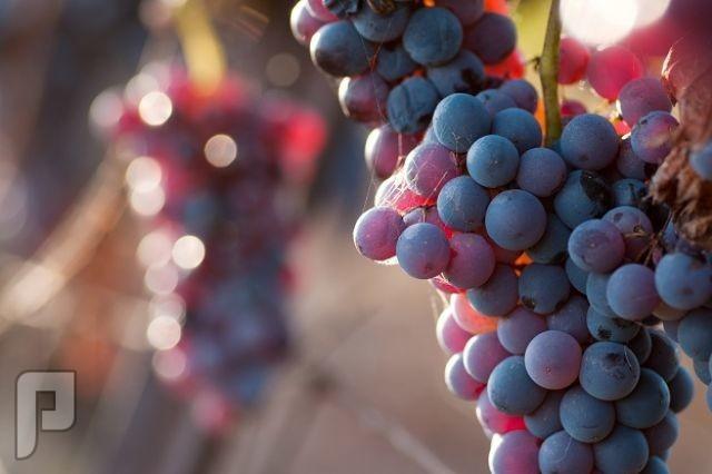 5 فوائد مدهشة للفواكه والخضروات لعلاج أمراض خطيرة • 10 فوائد للعنب تجعلها أفضل الفواكه