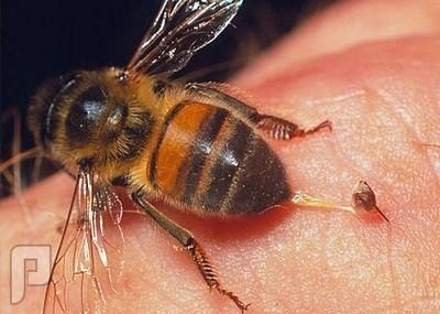 هل يعالج النحل ما استعصى على الأطباء