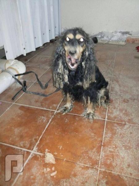 شابٌ يعثر على حيوان غريب رأسه يشبه الكلب بجدة بجسد صغير وأقدام مشوهة ولم يفلح في تحديد نوعه