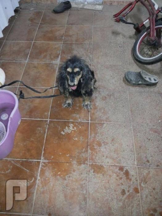 شابٌ يعثر على حيوان غريب رأسه يشبه الكلب بجدة