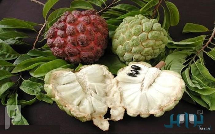 فاكهة القشطة تقضي على 12 نوعاً من السرطانات المميتة