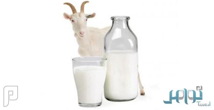 7 أسباب لتفضيل حليب الماعز عن الأبقار