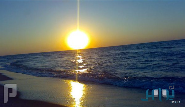 «شمس الصباح» تساعد على خسارة الوزن ما تأثيرها وكيف تستفيد منها؟