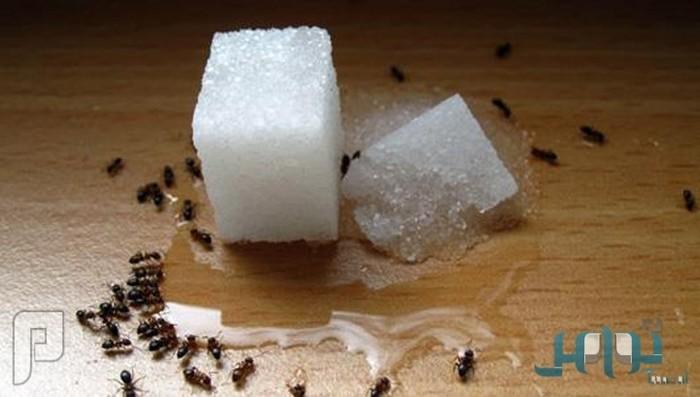 5 طرق طبيعية للتخلص من النمل المنزلي دون الحاجة لمبيدات