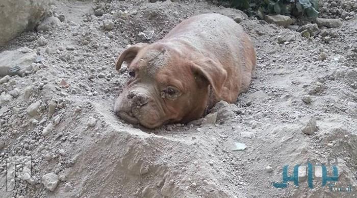 فرنسي يثير الرأي العام.. دفن كلبه حيًّا ومنعه من الهرب (صور)