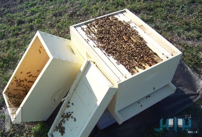 «هواء خلية النحل».. علاج مبتكر لأمراض الجهاز التنفسي