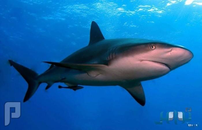 سمكة قرش تقضم قدم راكب أمواج في شواطئ هاواي