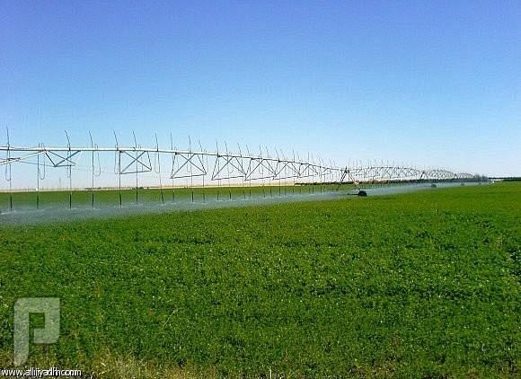 «القصيم الزراعية» تؤجر مشروعها الزراعي بمركز شري