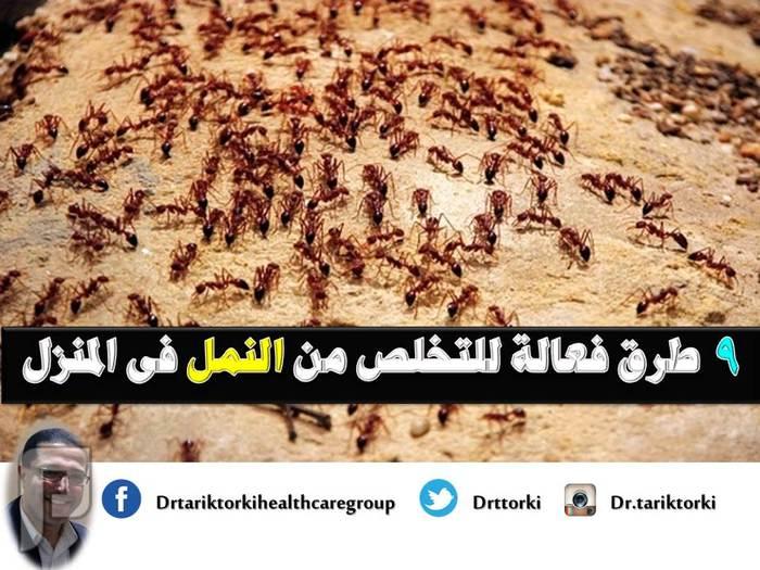9 طرق فعالة للتخلص من النمل فى المنزل | دكتور طارق تركى 9 طرق فعالة للتخلص من النمل فى المنزل - دكتور طارق تركى