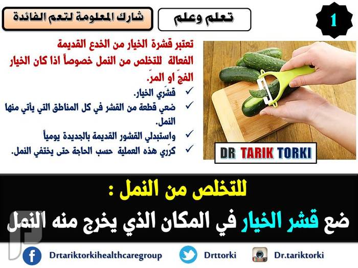 9 طرق فعالة للتخلص من النمل فى المنزل | دكتور طارق تركى