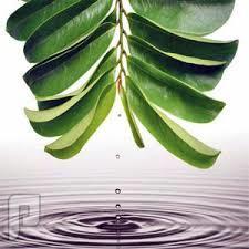 كبسولات مستخلص أوراق شجرة القشطة لمقاومة الكثير من انواع السرطان.