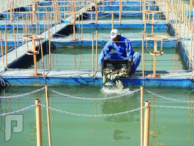 مشاريع في  الاستزراع السمكي