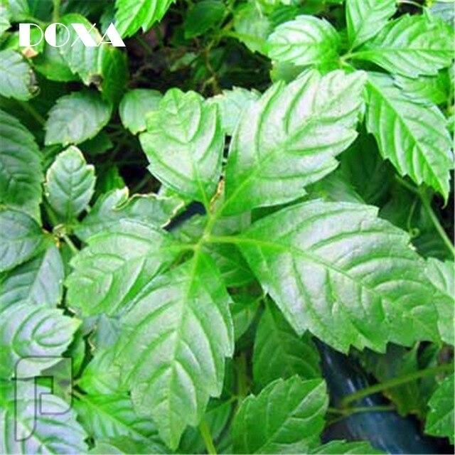 كبسولات عشبة الجياوجولان او عشبة الخلود الصينية لحماية وتنظيم مناعة الجسم.