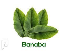 كبسولات مستخلص ورق شجرة البانابا للمساعدة على احتواء مرض السكر.