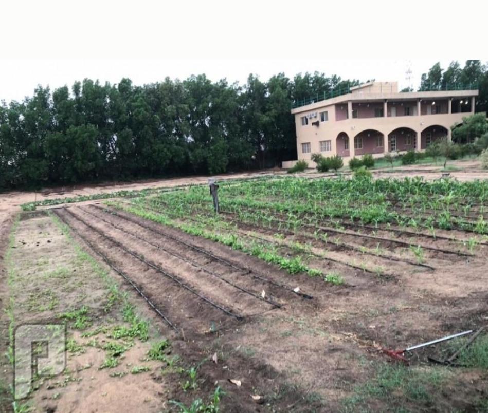 مزرعة للبيع في الجبيل طفيح