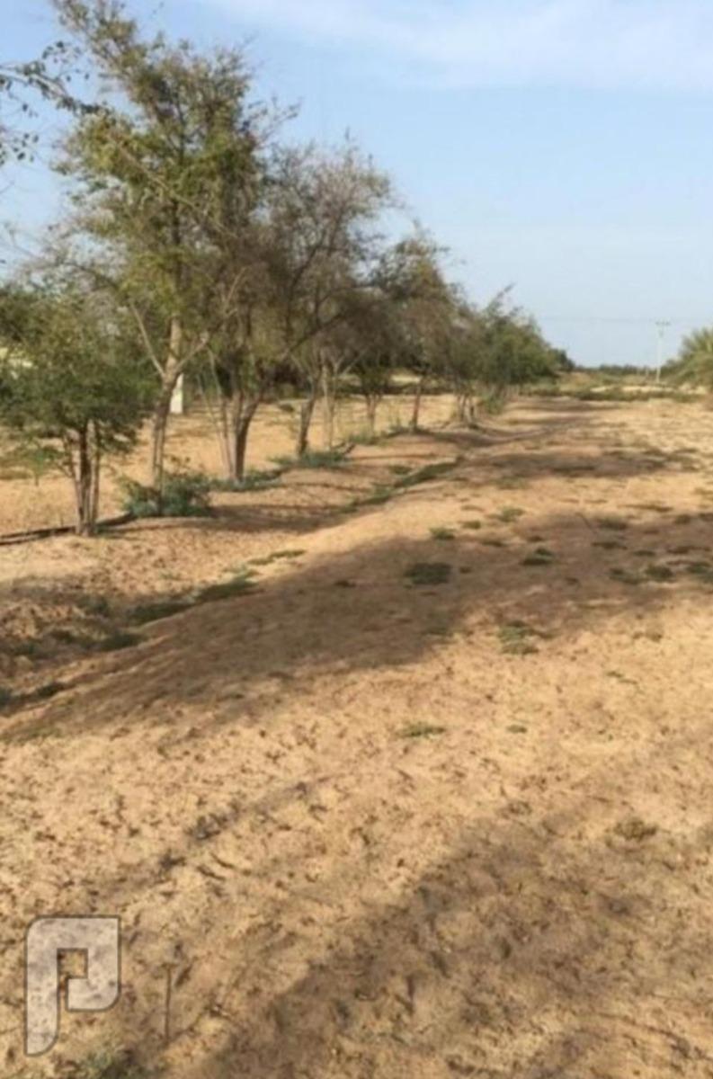 مزرعة للبيع في الجبيل