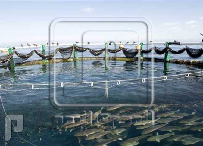 تعرف على فرص وجدوى مشروع الاستزراع السمكي