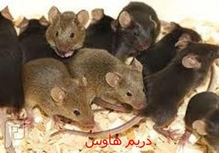 افضل شركة مكافحة الفئران بالرياض افضل شركة مكافحة الفئران بالرياض
