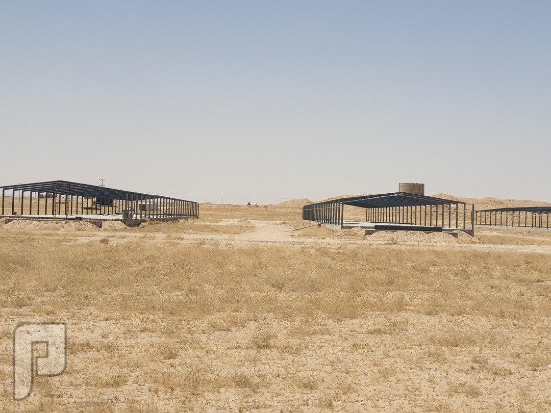 مقاول مزارع دواجن بناء شركة شبوك