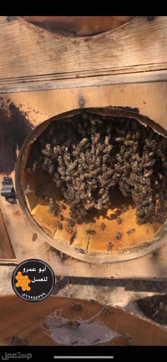 عسل سدر عسل مجرى عسل الغابة السوداء