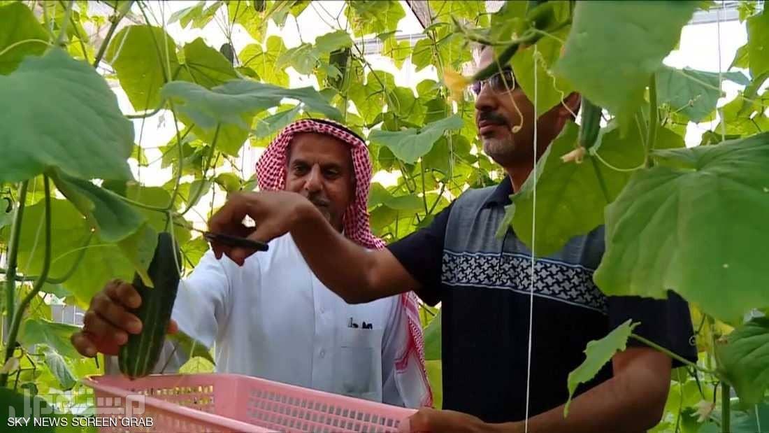 الزراعة في المملكة