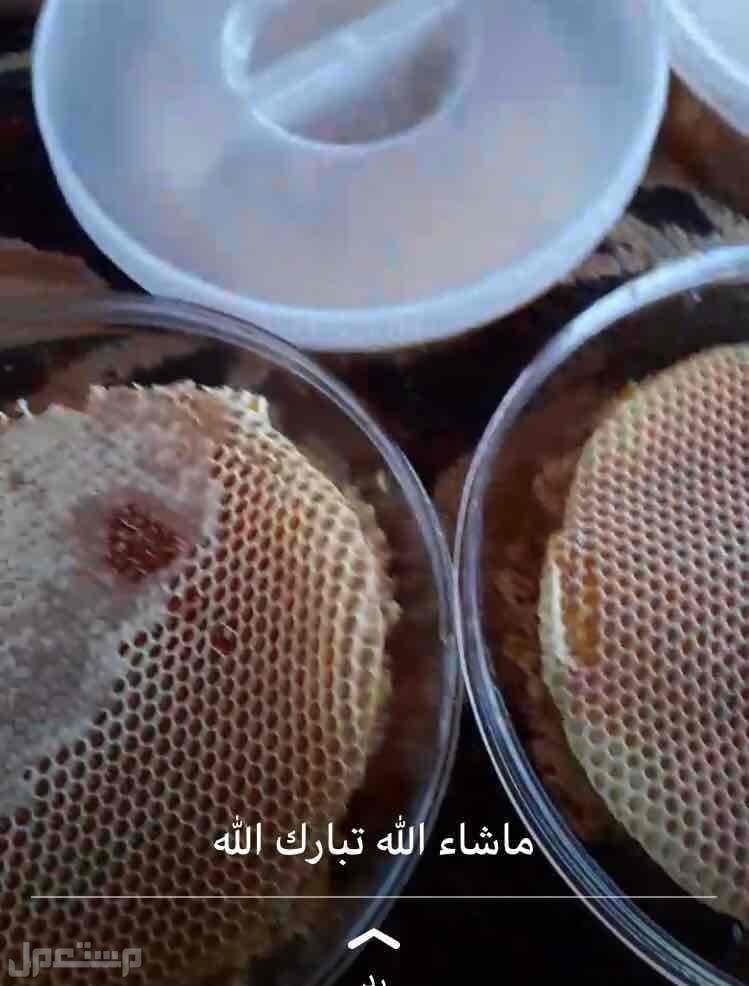 عسل سدر بلدي مضمون