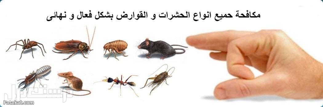 مؤسسة الخليج الدولية للصيانة والنظافة ونقل العفش وغسيل الخزانات والشقق رش جميع انواع الحشرات مع الضمان