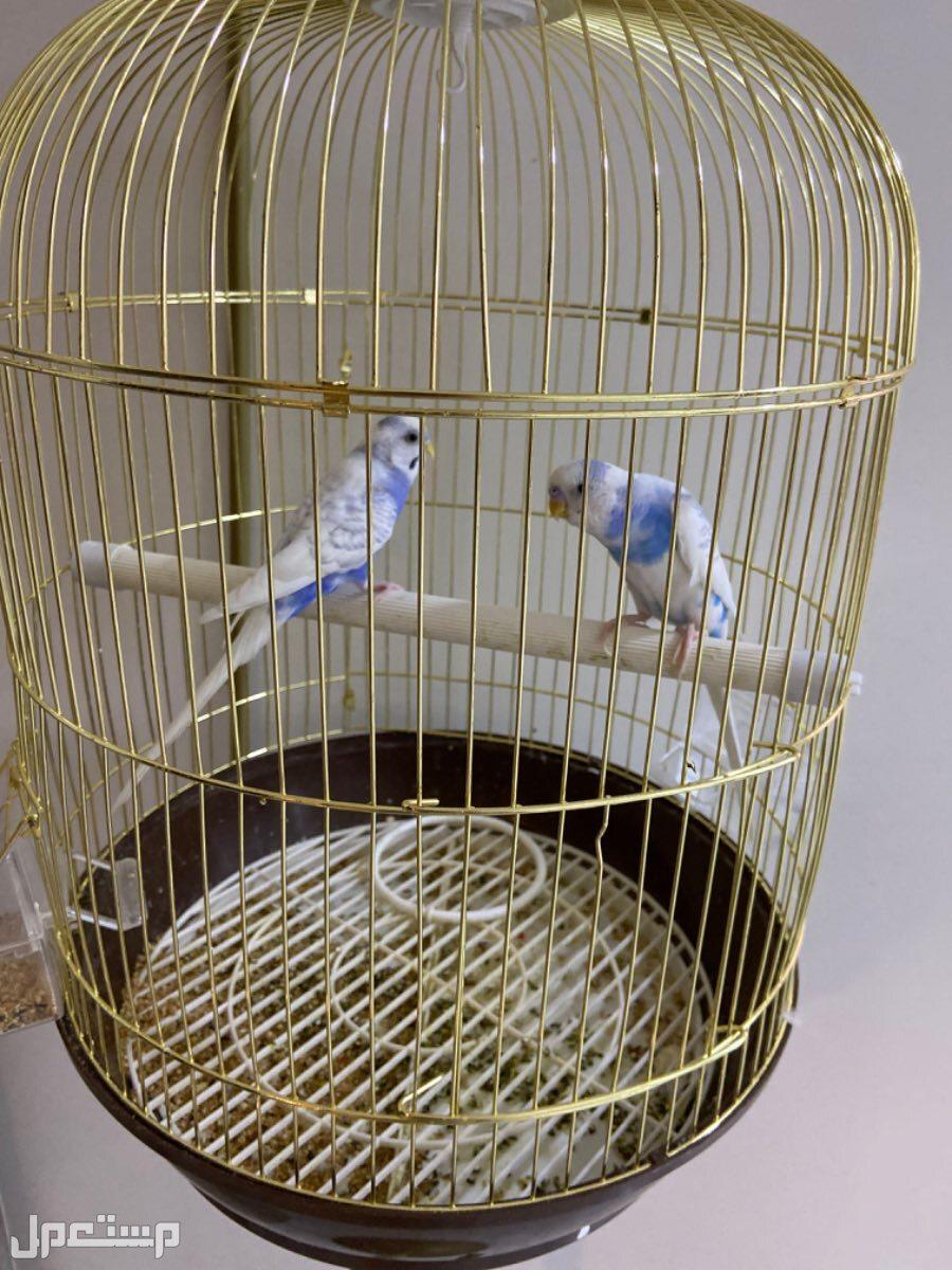 طيور للبيع