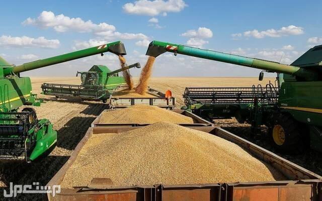 مستحقات الدفعة الرابعة لمزارعي القمح