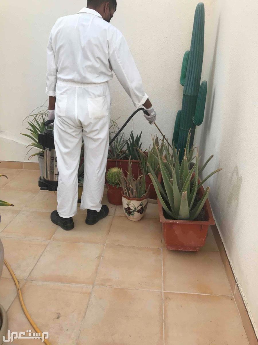 مكافحة حشرات وتعقيم ضد الفيروسات Pest Control مكافحة الحشرات في المنازل