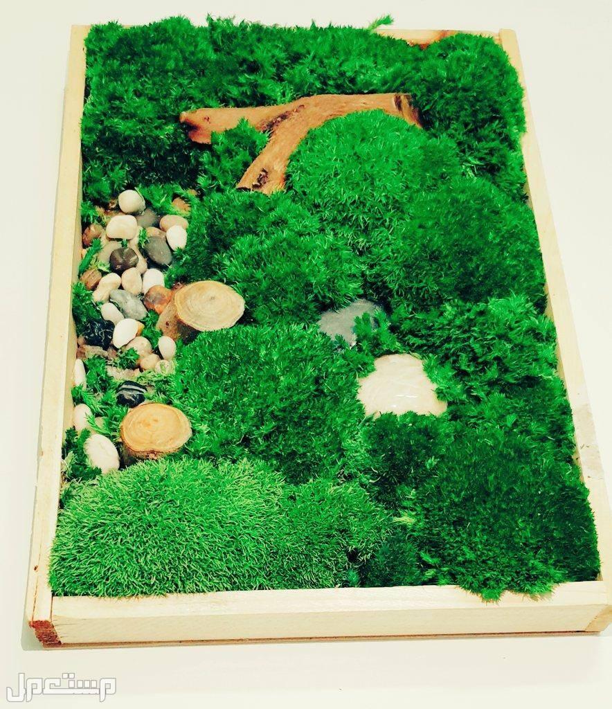 طحالب جدارية طبيعية محنطة لوحة جدارية من الطحالب المحنطة