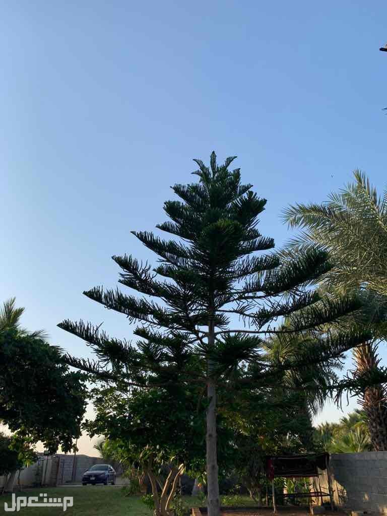 خلف المخطط الي مقابل مستشفي الملك فهد طريق جيزان ابوعريش