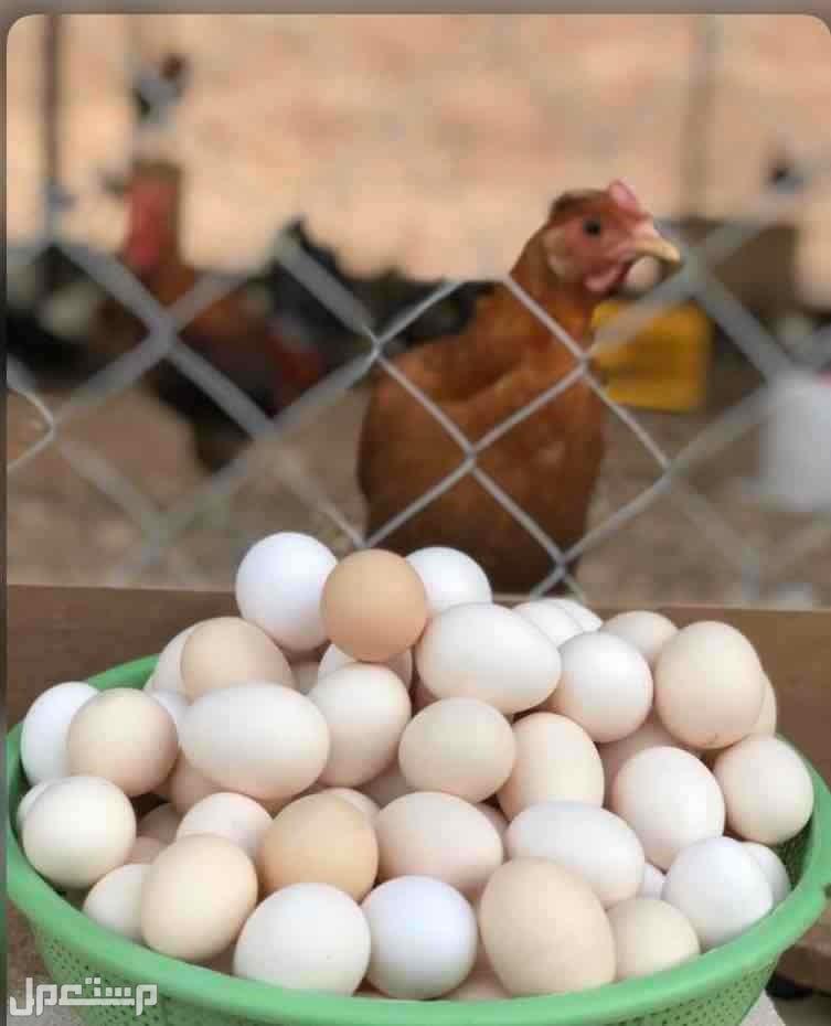بيض بلدي طبيعي100%