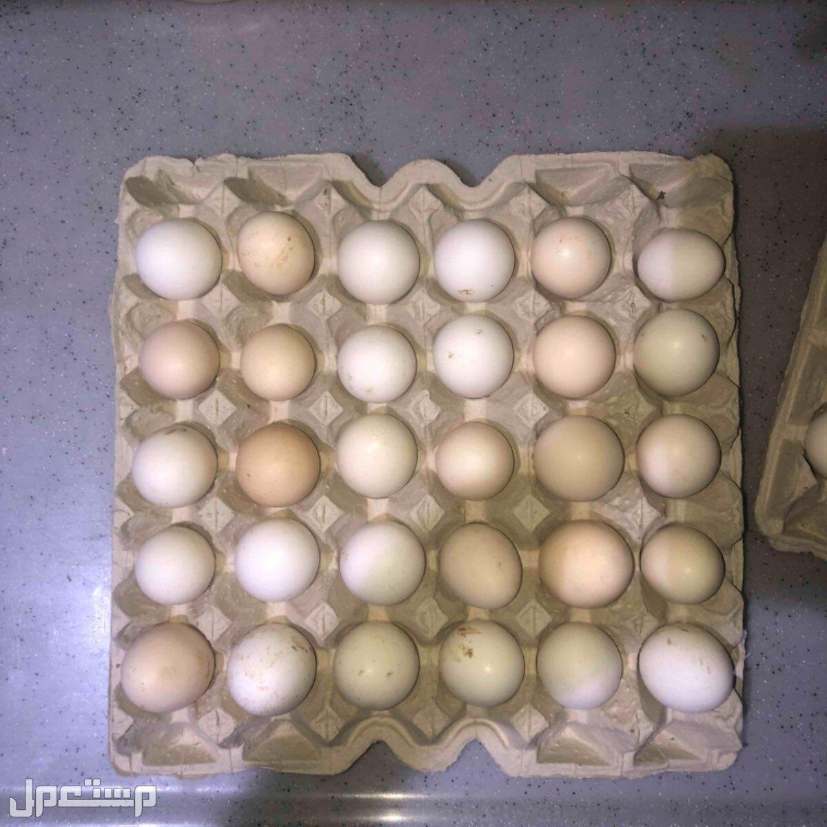 بيض بلدي يومي