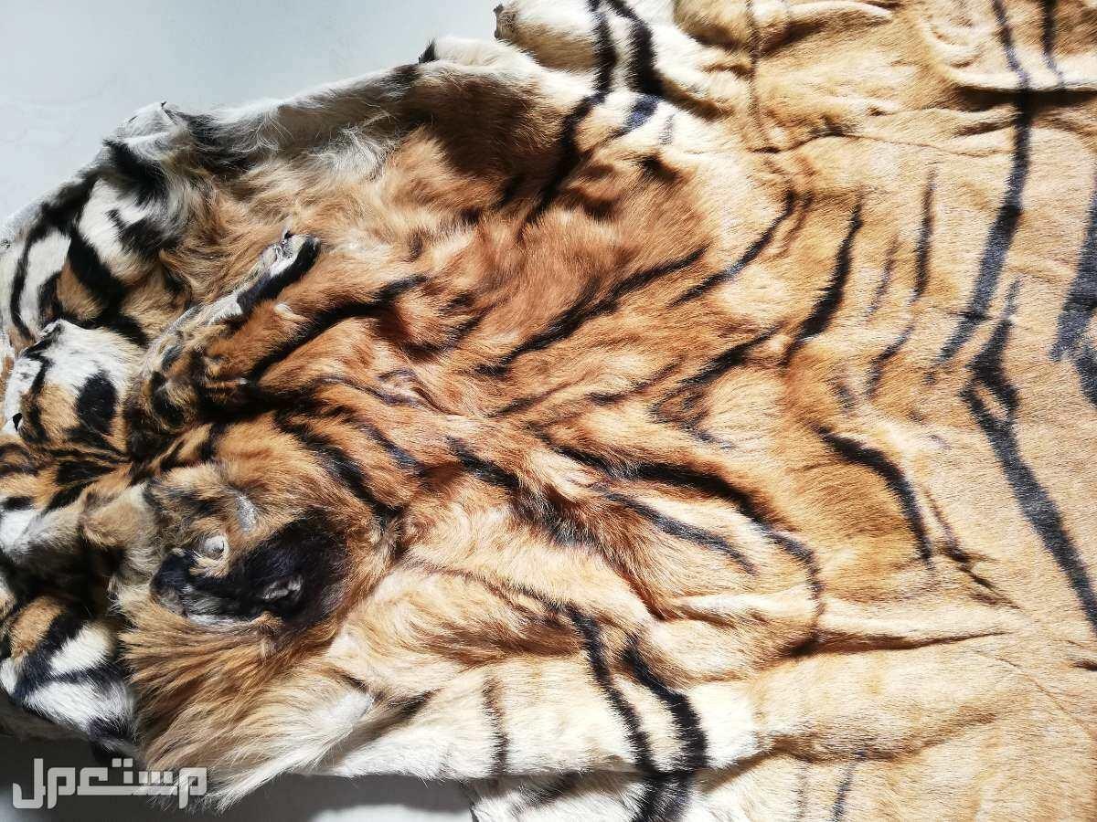 جلد نمر مخزن نظيف